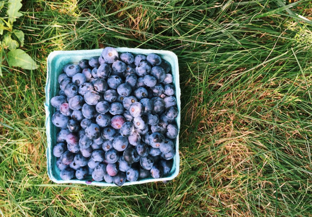 A quart of blueberries sitting in grass
