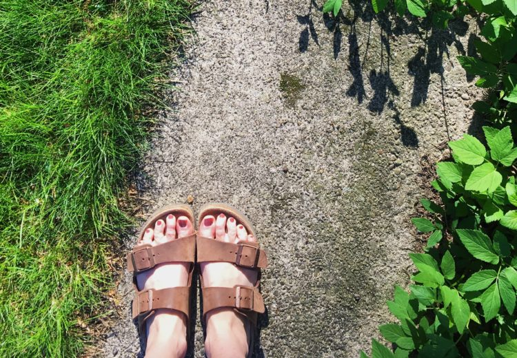 Green grass and Birks